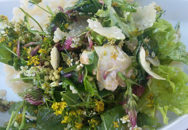 Blütenzauber Kräuterwandreung